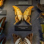 Музей естественной истории